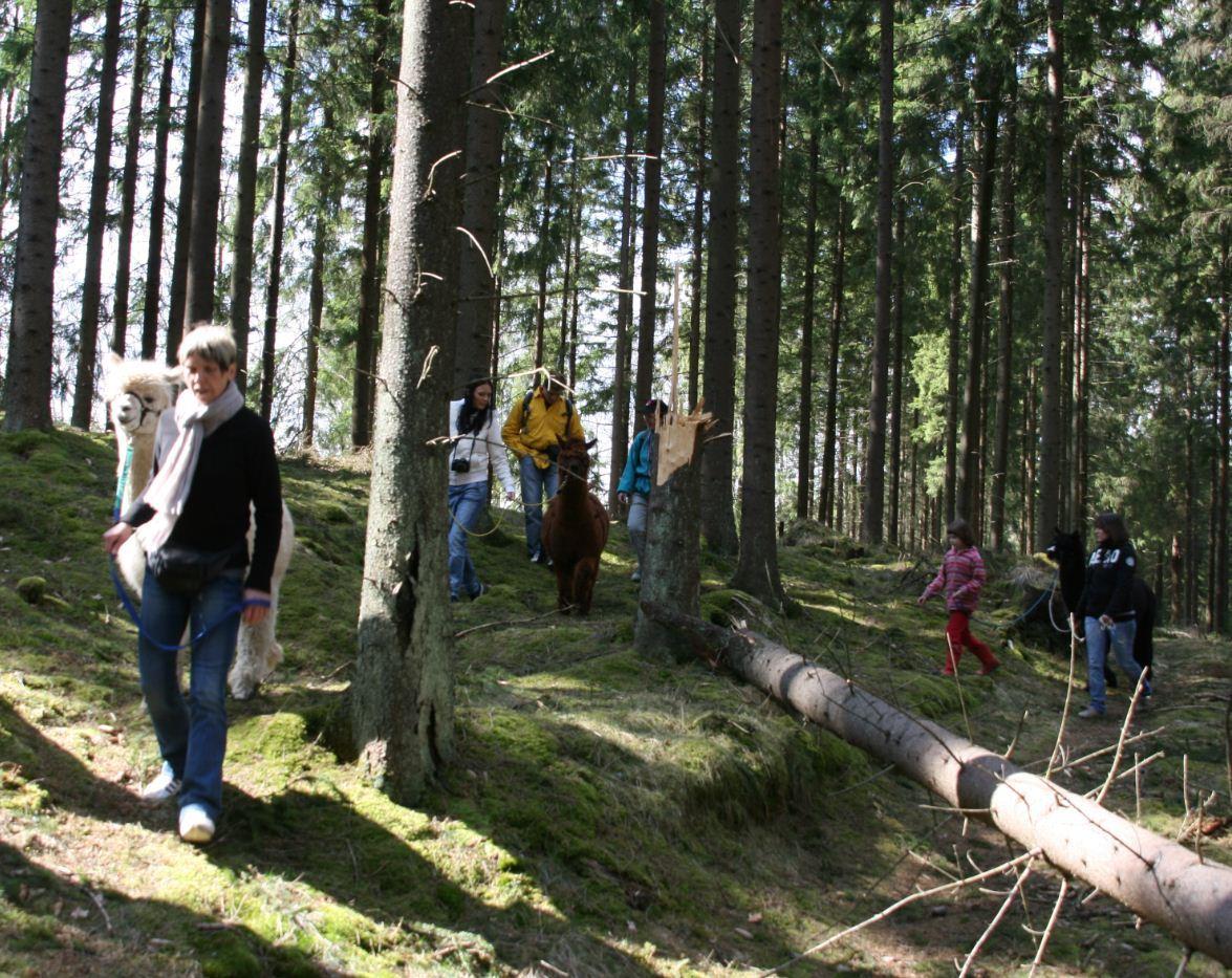 Alpakatrekking - eine ganz spezielle Wanderung