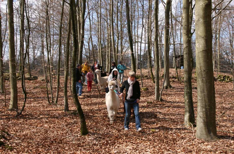 Alpackatrekking – en annorlunda vandring