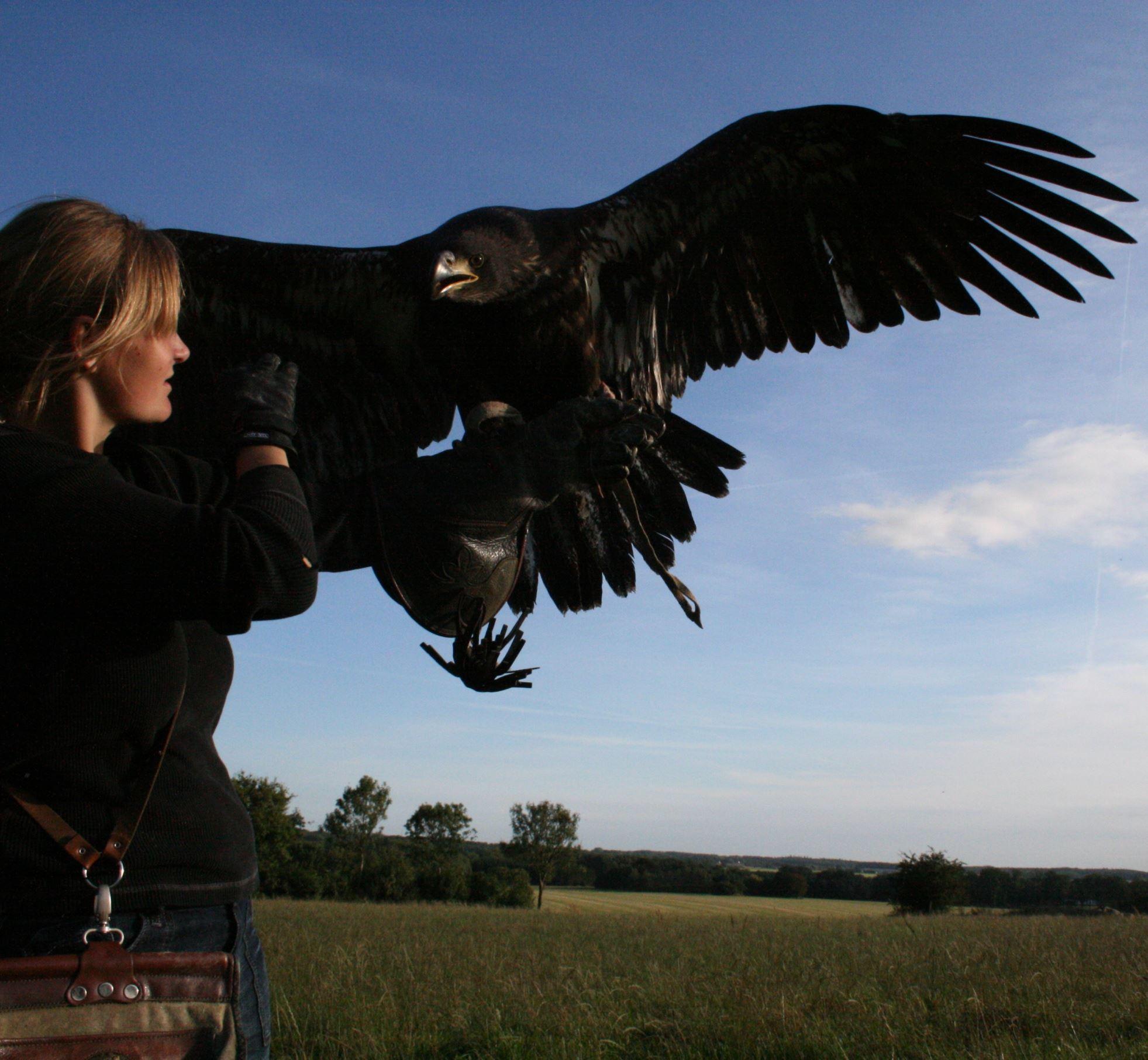 Bornholms rovfågelshow