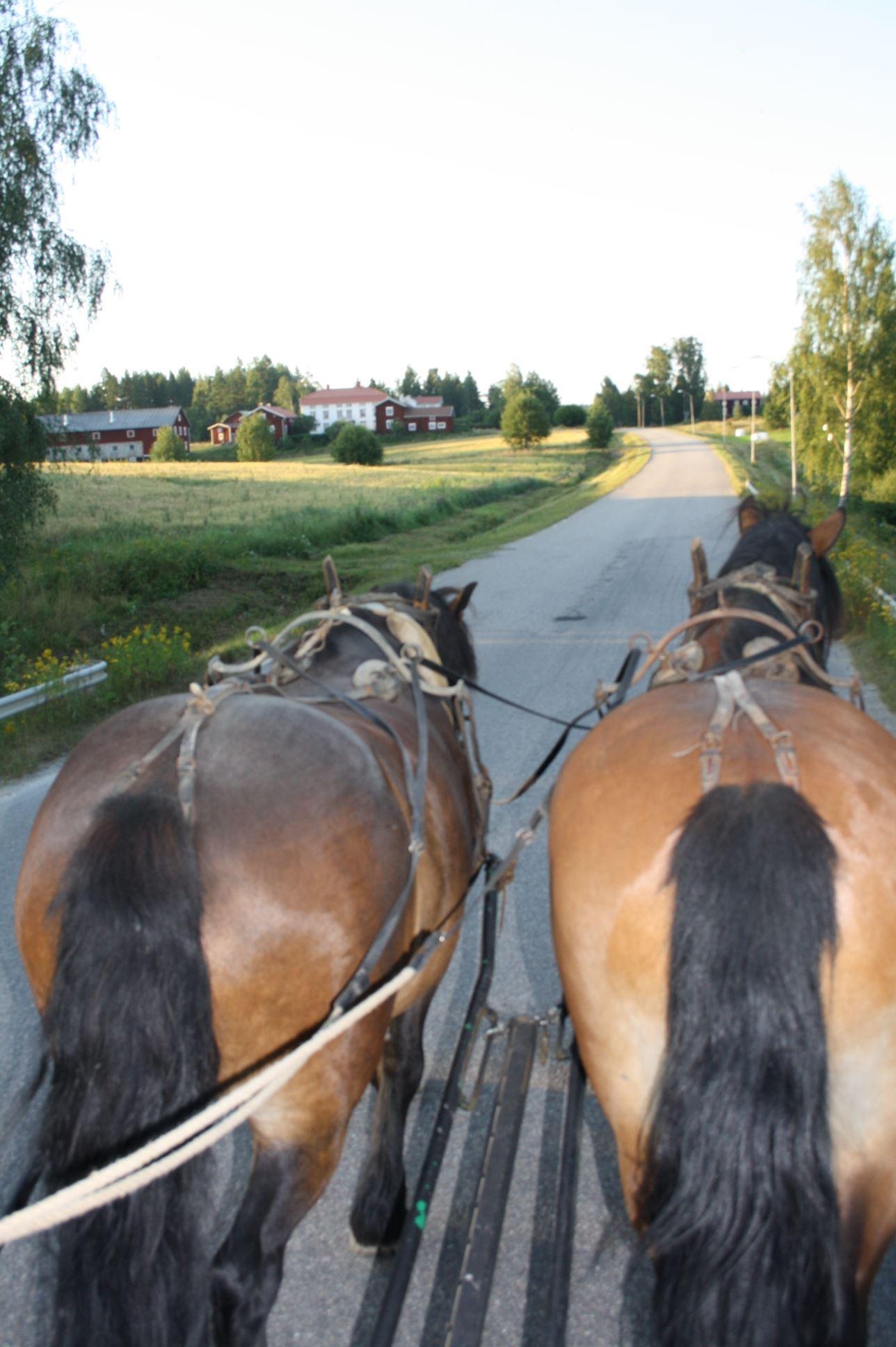 Häst och vagn i Alfta