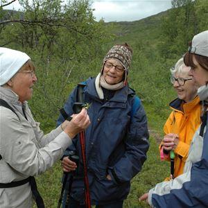 Flora & geologivecka på Hemavan Fjällstation 15-21 juli