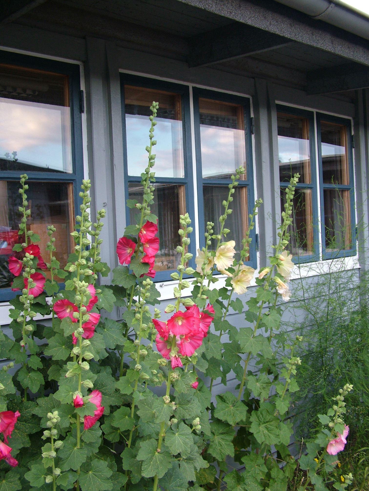 Station Linné-vandrarhemsrum