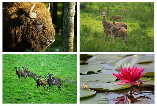 Weekends at Eriksberg Wildlife Park