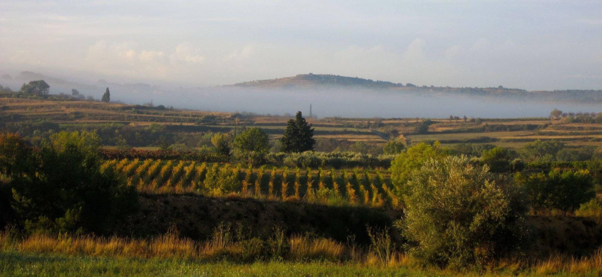 Vignes et Oliviers avec Montpellier Wine Tours