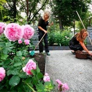Wij Trädgårdar