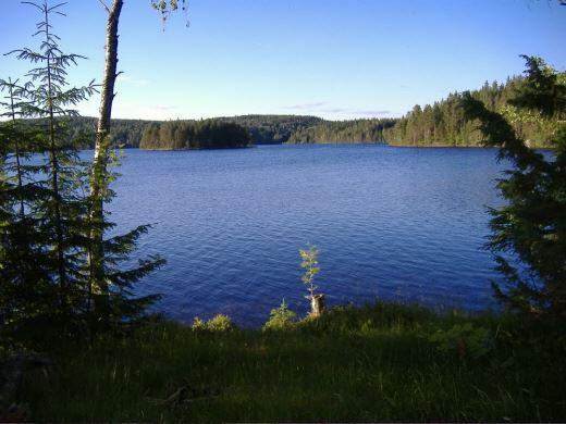 Utsikt över sjön.