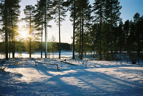 Vasaloppslogi, stugor och privatrum M79, Säs, Mora