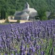 Half day Village lavender tour
