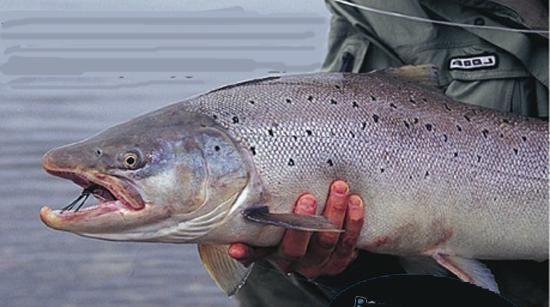 Fiskecenter i Umeå