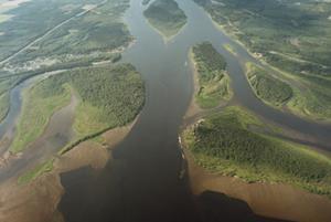 Ume river delta