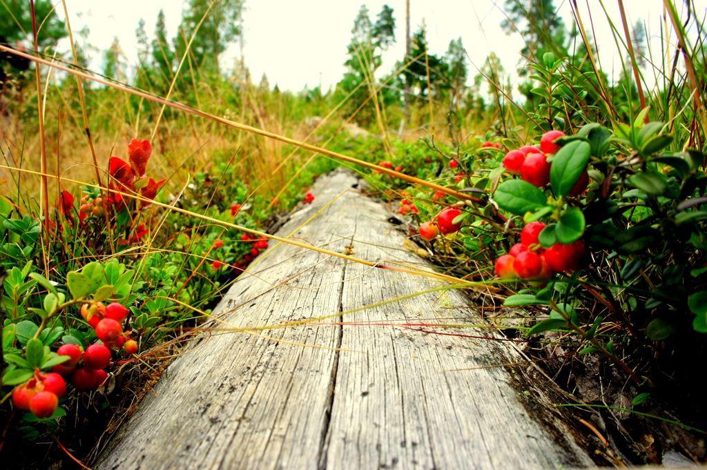 Naturreservat i Umeåregionen