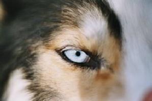 Hundspann för alla med Aurora Borealis Adventure