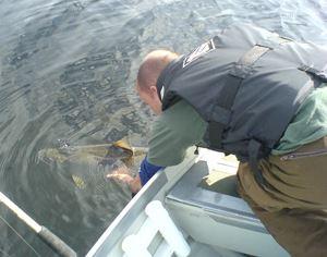 Fiska i Lillsandsjön och Storsandsjön