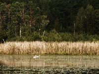 Lugnesjöns naturreservat