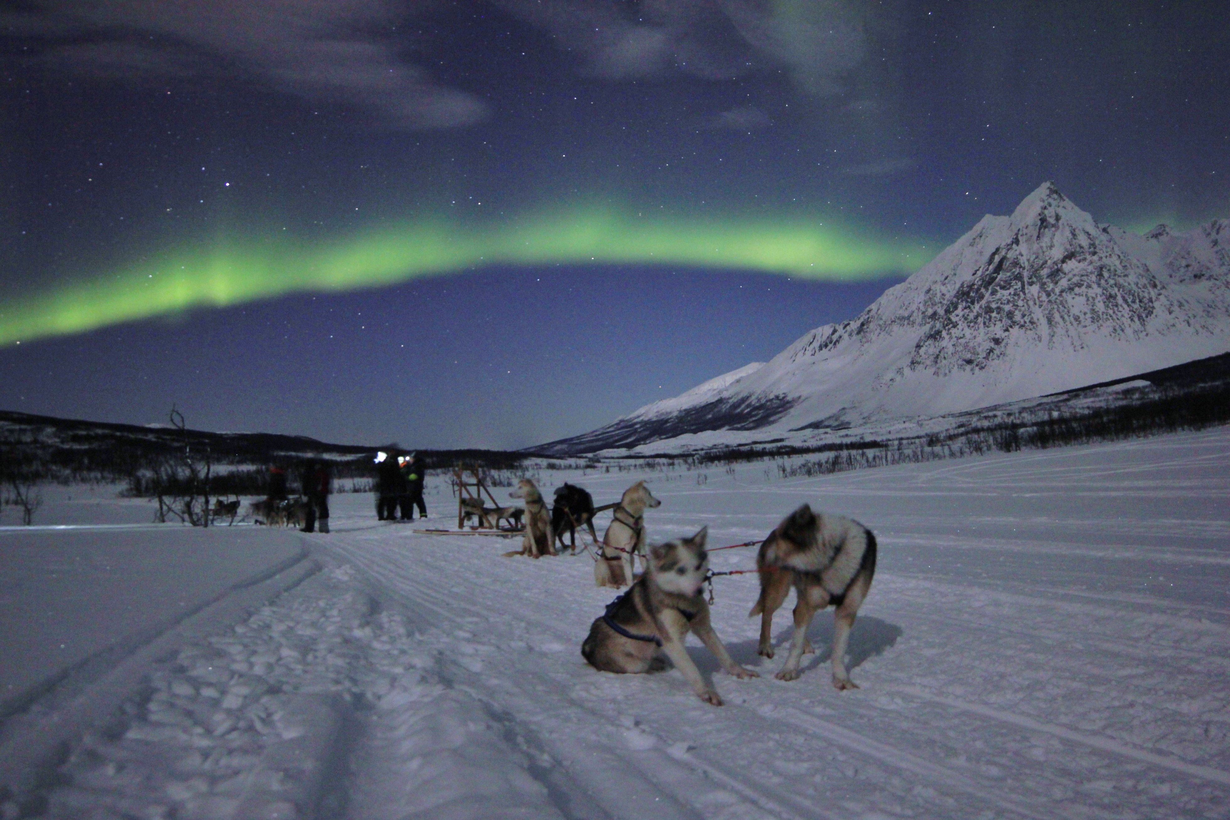 Northern Lights tour with dog sledge – Evening - Aurora Alps