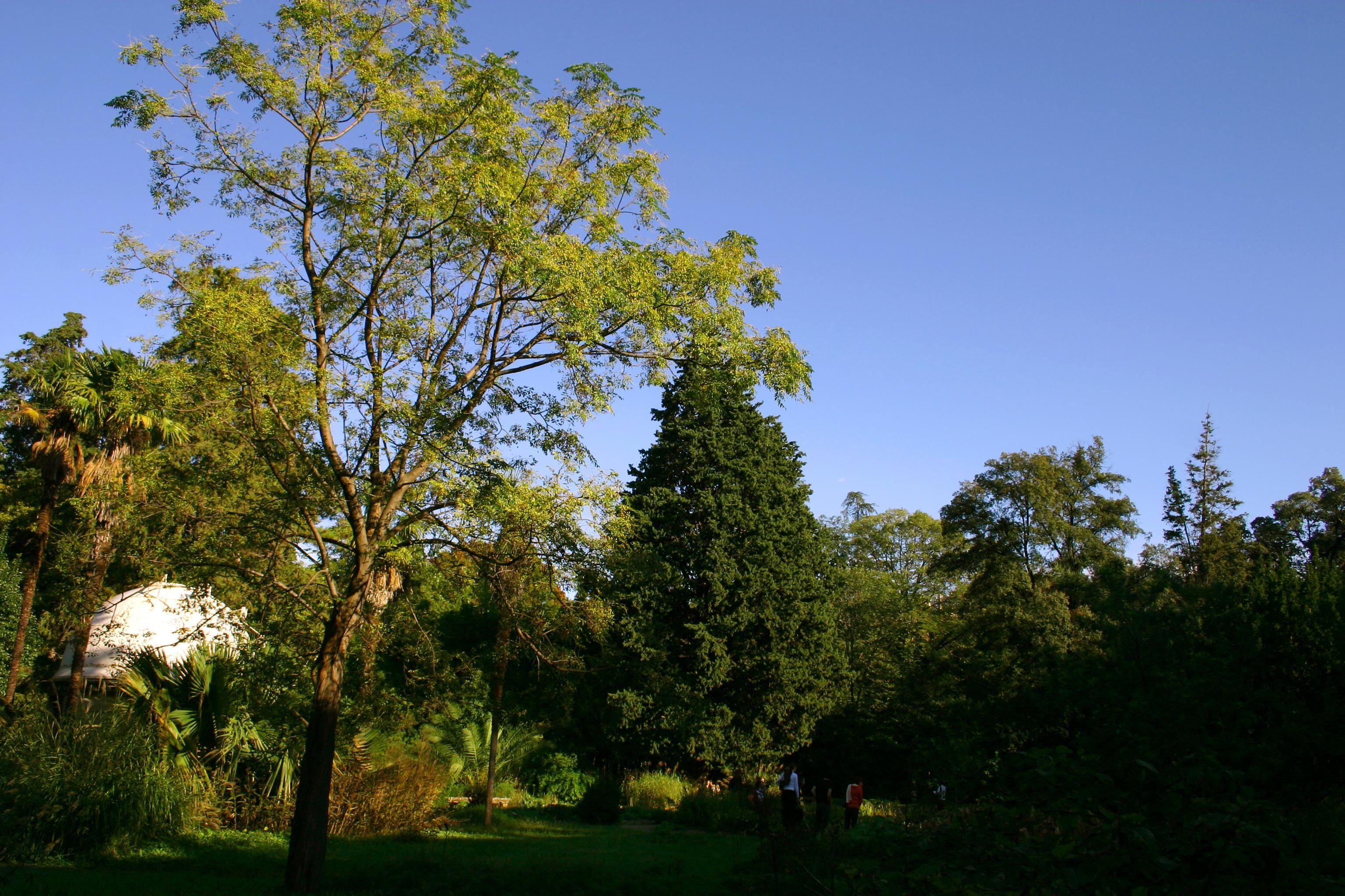 Du jardin de la Reine au jardin des plantes