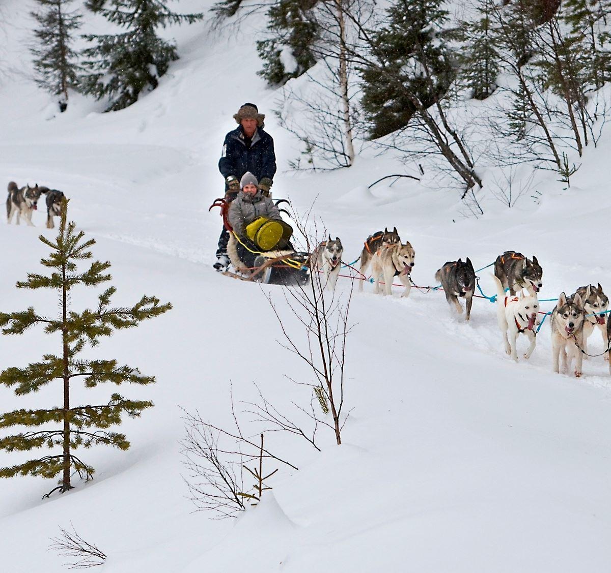 Dante Dahlgren,  © Dante Dahlgren, Dog team sledging with Hedlunda husky