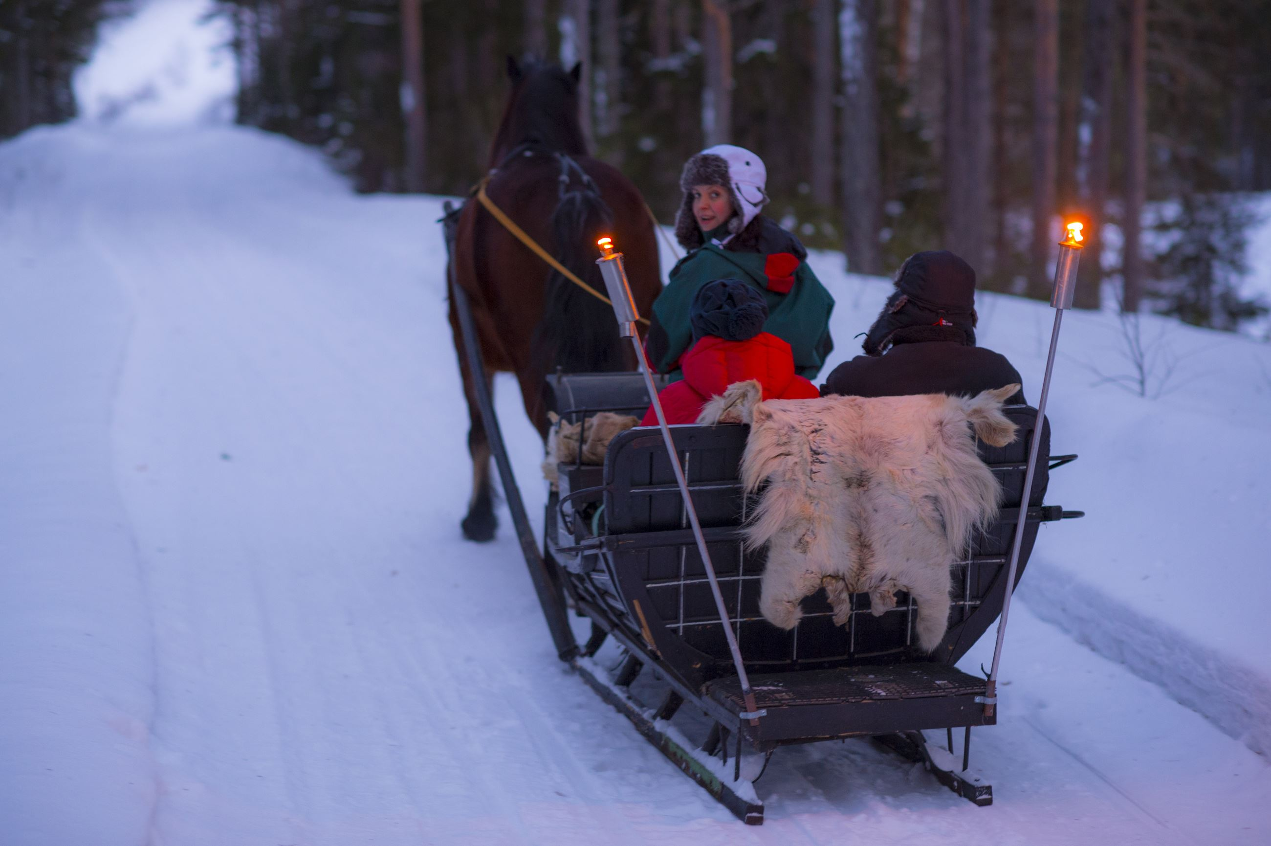 Horse and sleigh through a wintry wilderness