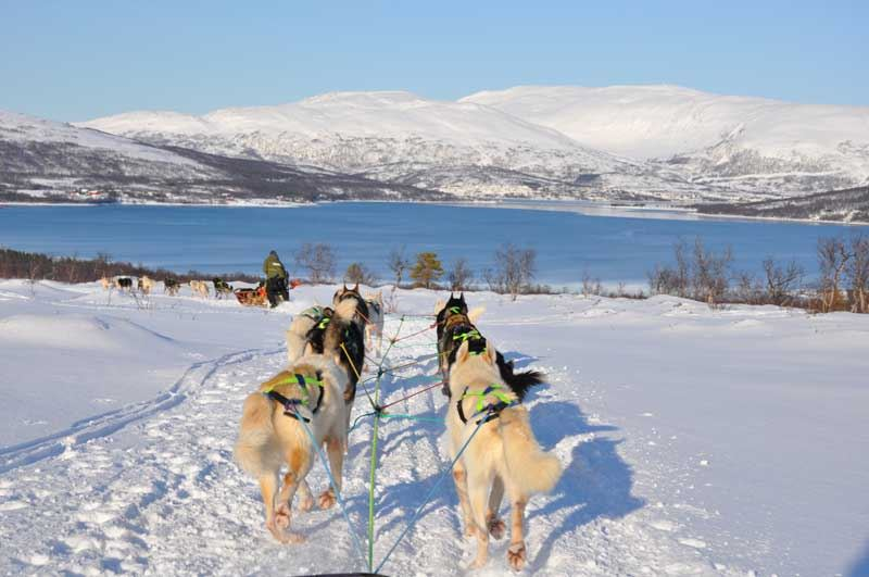 One Day Dog Sledding Expedition – Tromsø Villmarkssenter