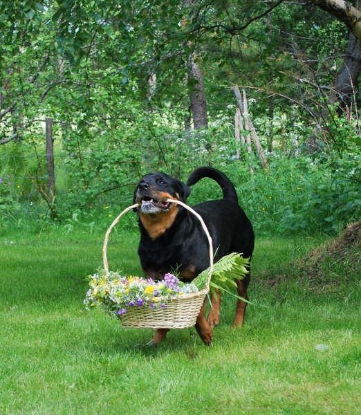 Zandra Dahl, Nova med  bllomsterkorg