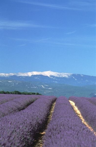 5. EXCURSION THE LAVENDER ROAD