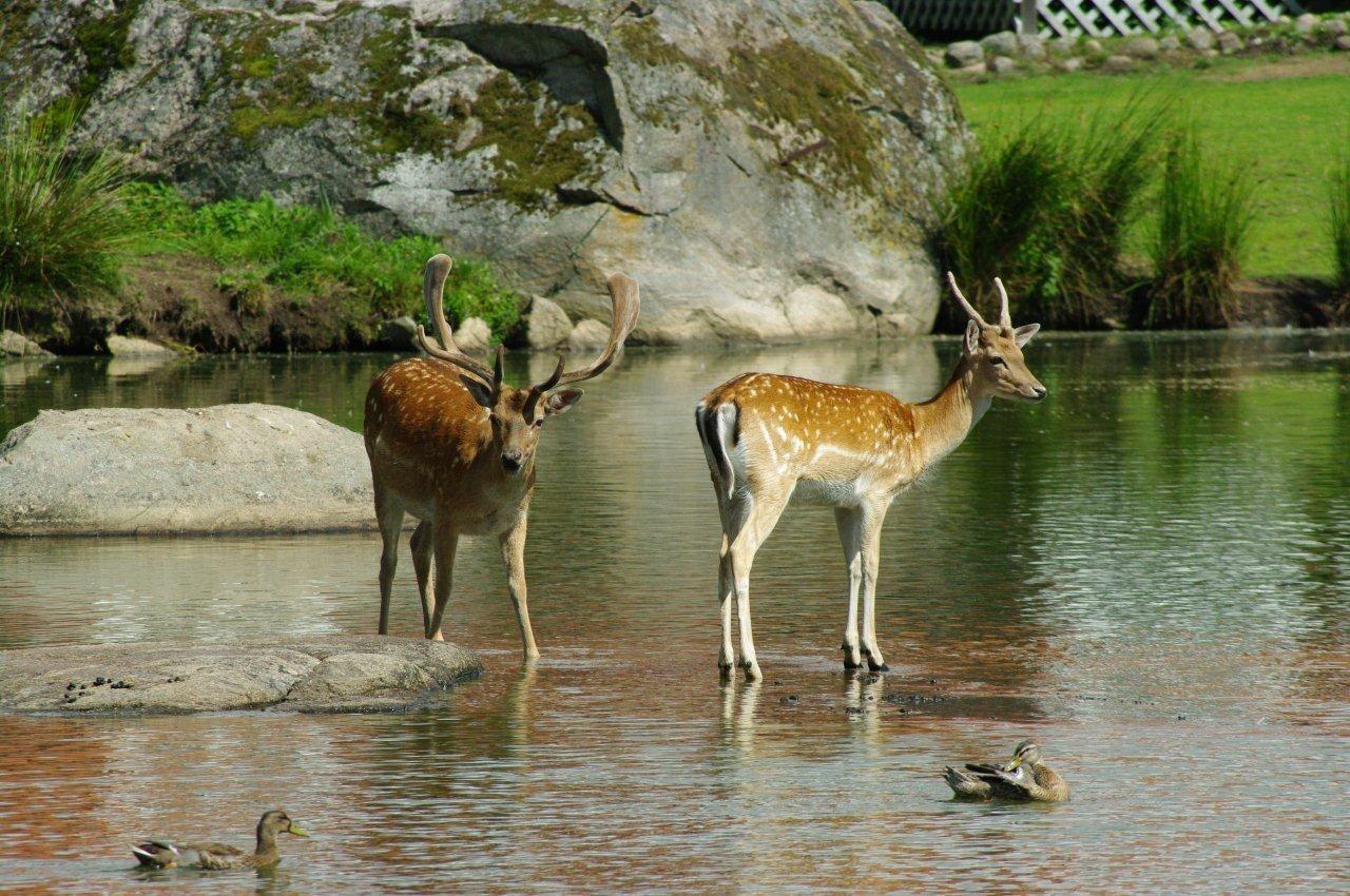 Bike Safari among wild animals