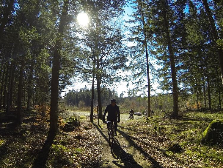 MTB cycling in the enchanted forest