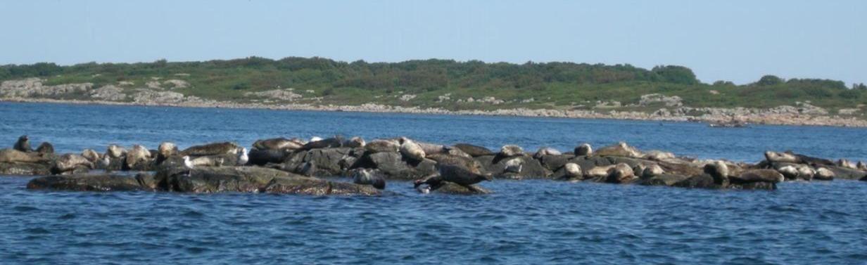 Sealsafari