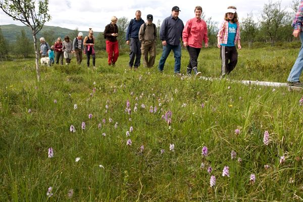 Hiking on Tänndalens nature and floral trail with Ingemar Lind