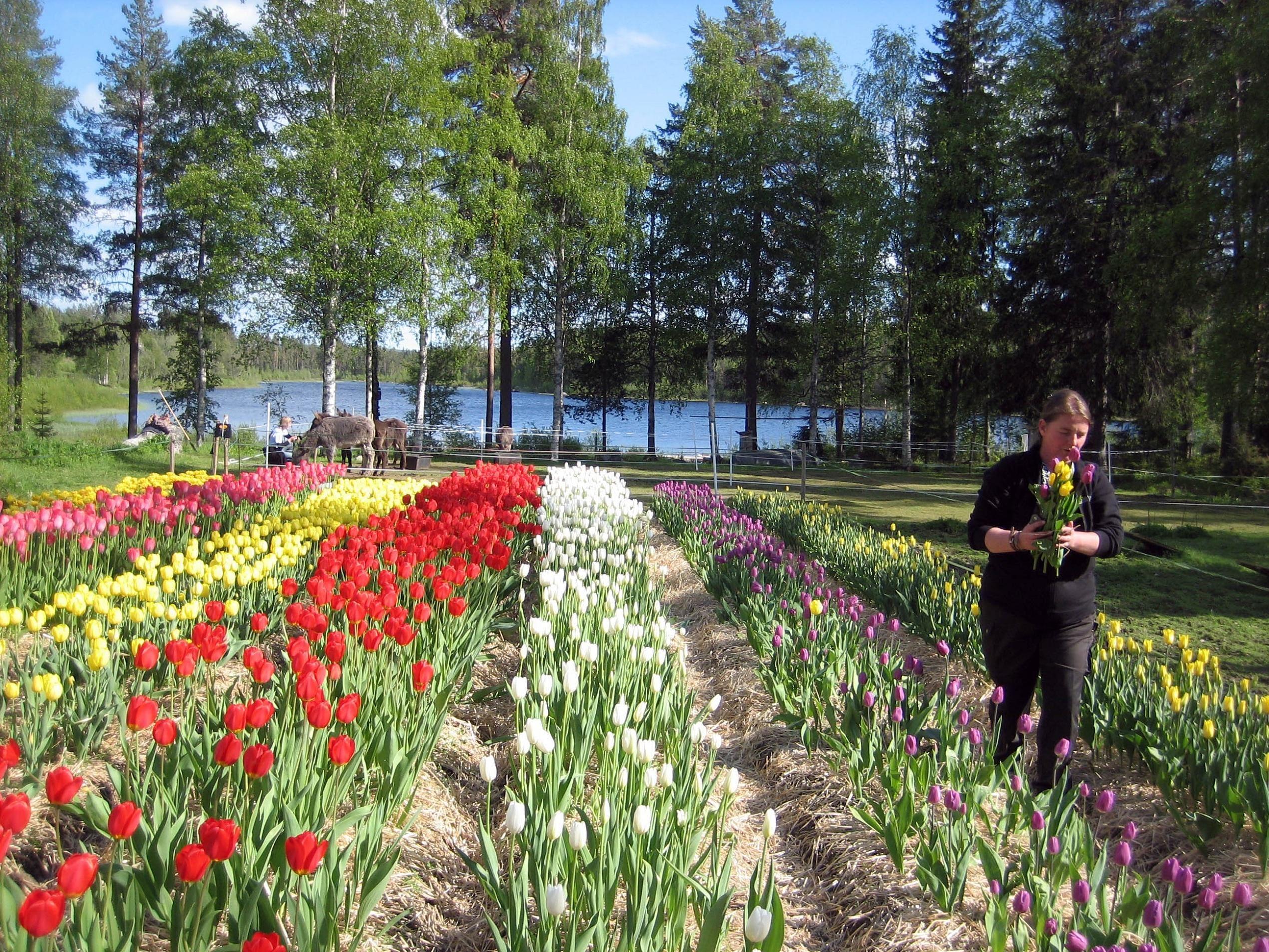 Activities at Farm Backsjön in Ådalen