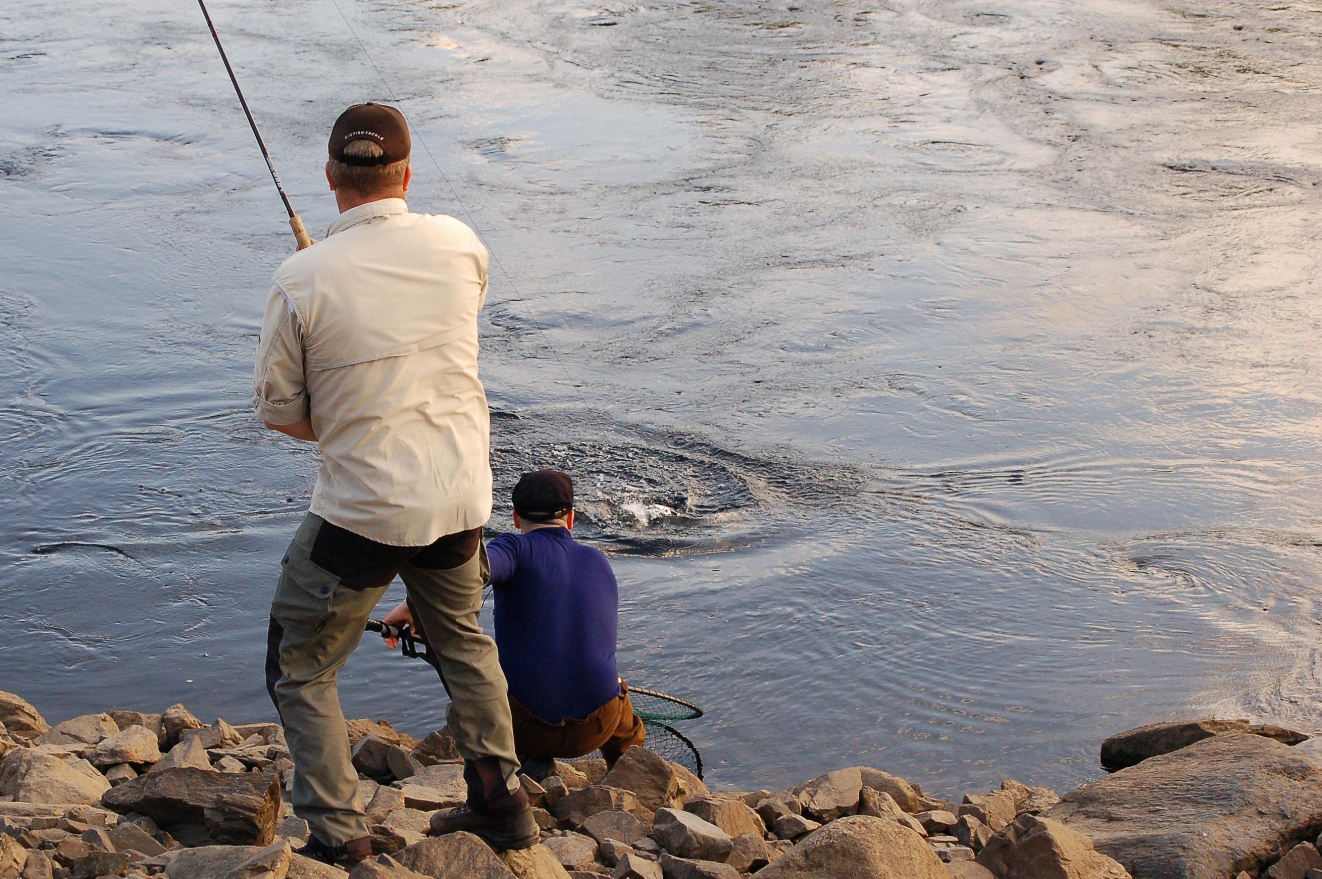 Foto: Medai Lupus, Lax som hovas vid Nipstadsfisket