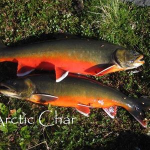 Lake fishing / Inland fishing - Nordic Safari