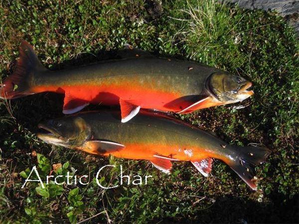 Inlandsfiske - Nordic Safari