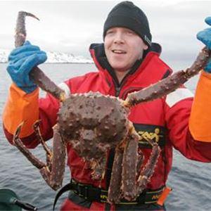 King crab fishing in winter and summer time- Nordic Safari