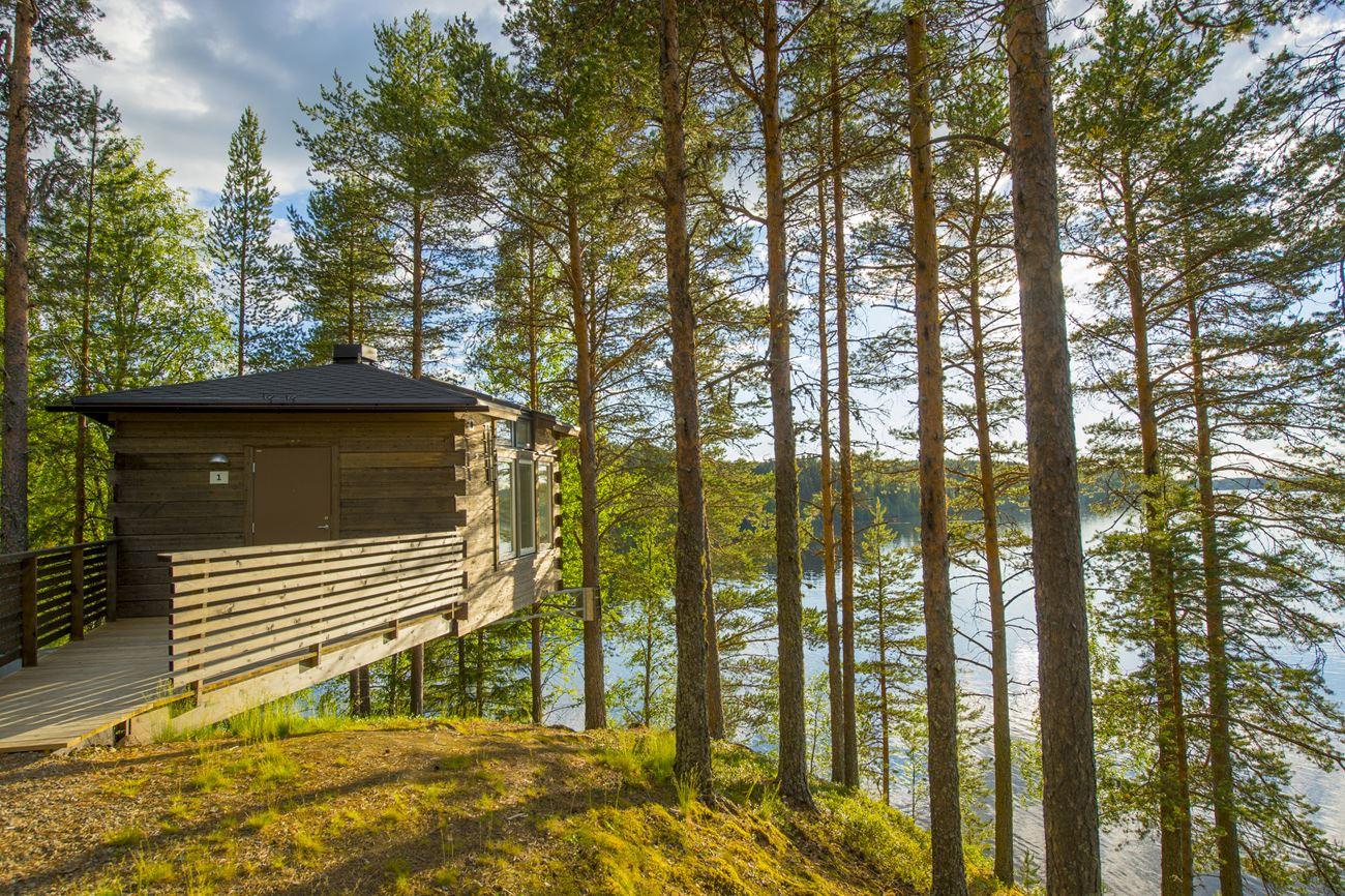 Bird's nest - Granö Beckasin