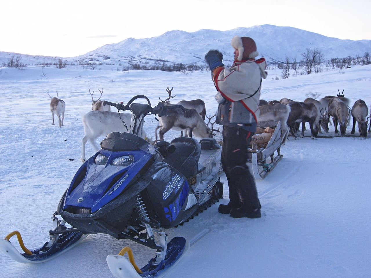 By Snowmobile to Mountain Where Reindeer Herd Walks Free – Arctic Guide Service
