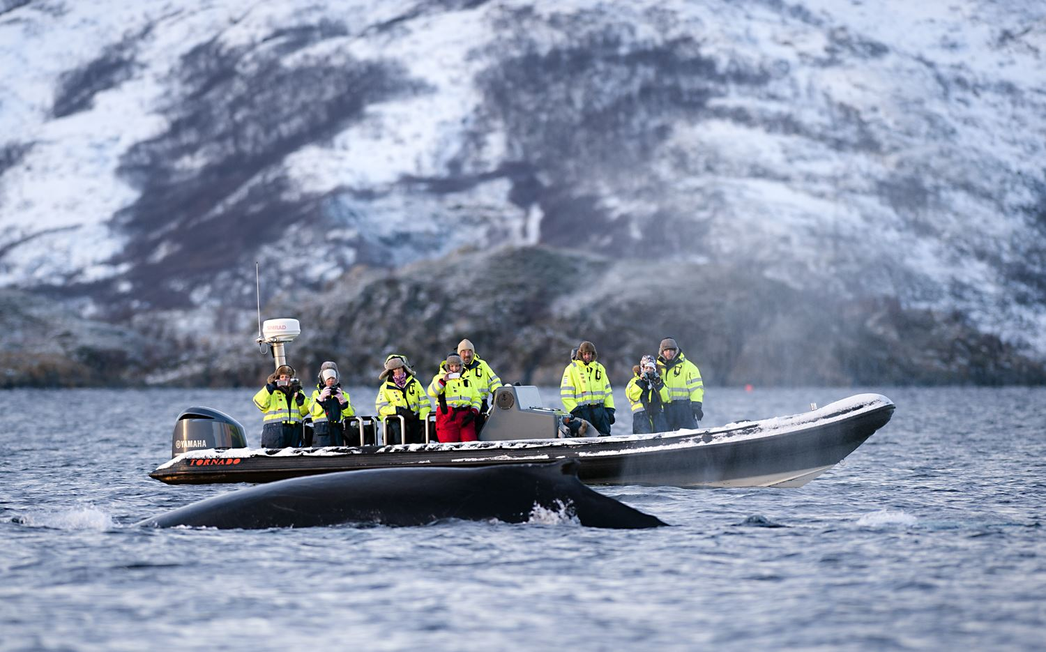 Orca and Humpback Whale safari by RIB with marine biologist – Tromsø Friluftsenter