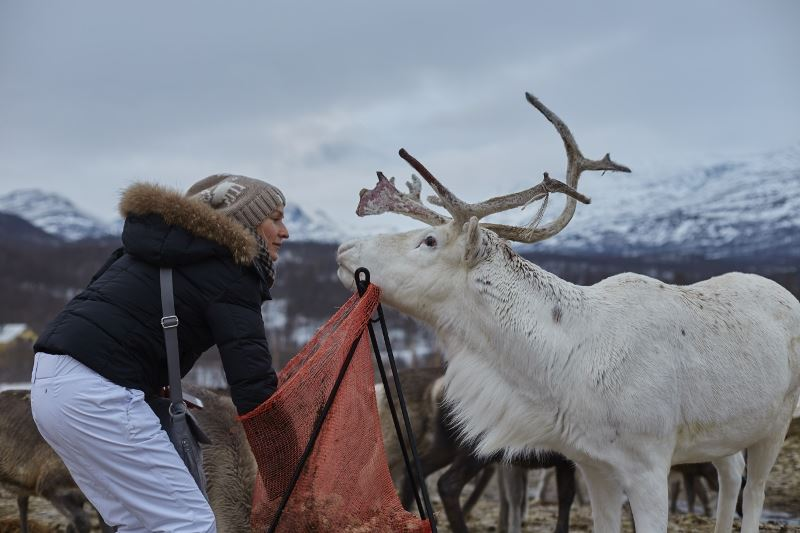 Natur skjønn tur og møte med reinsdyrflokker - Arctic Guide Service