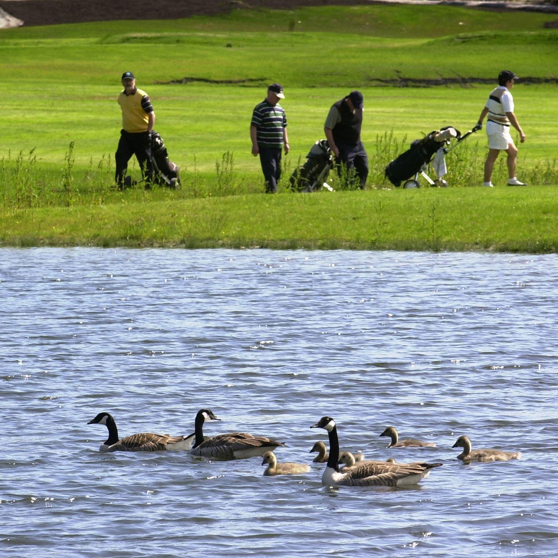 Veckefjärdens golfbana