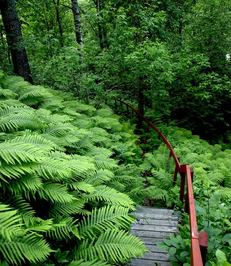 Arboretum Norr
