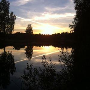 Solnedgång över sjö med buskar och träd som siluetter.