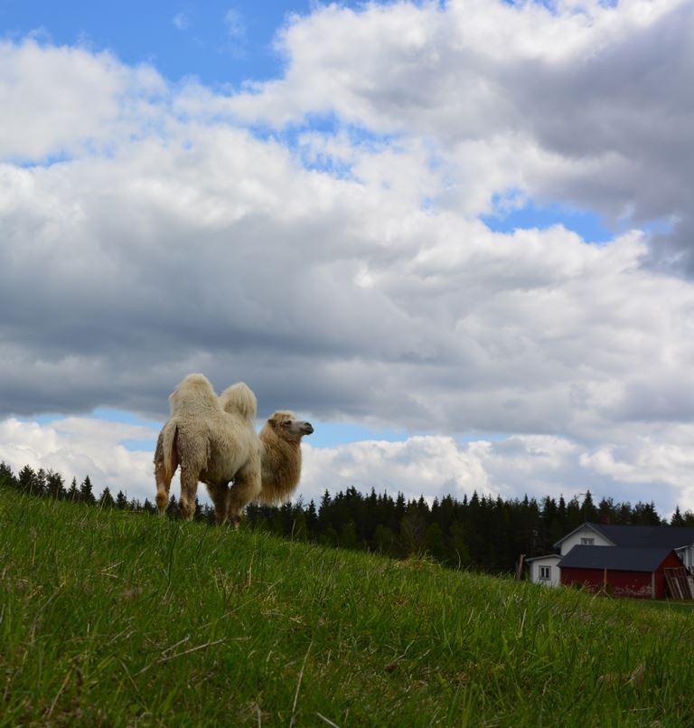 Mickelbo Bauernhof