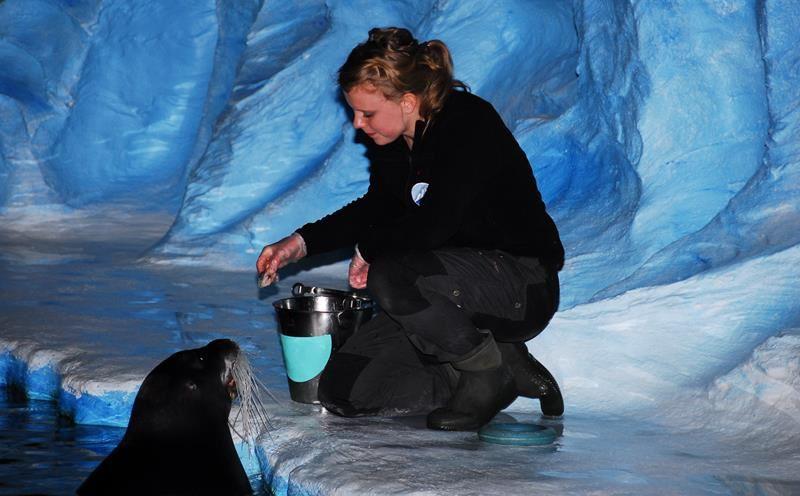 Seal training at Polaria