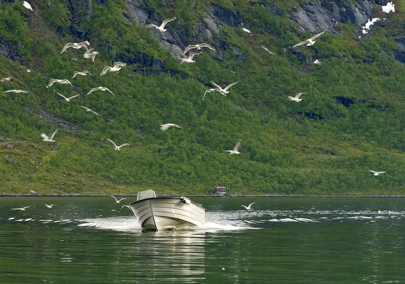 Ersfjordbotn Kystferie