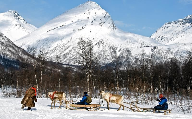Reindeer Sledding - Lyngsfjord Adventure