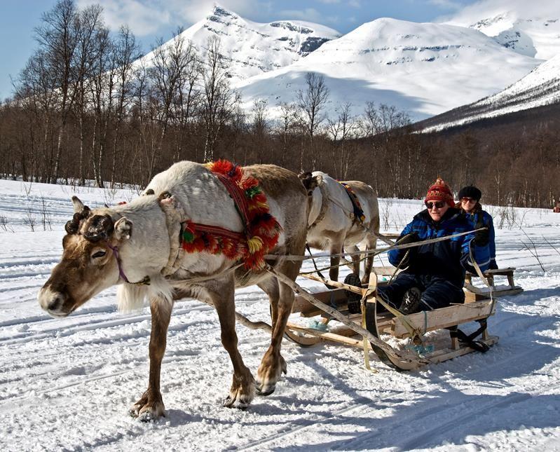 Reindeer Sledding Camp Tamok - Lyngsfjord Adventure