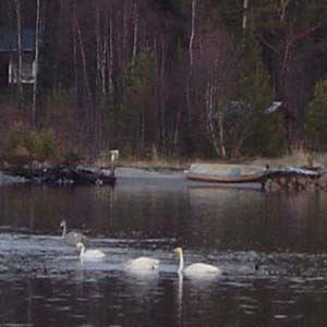 Hyr kanot eller båt i Sikeå
