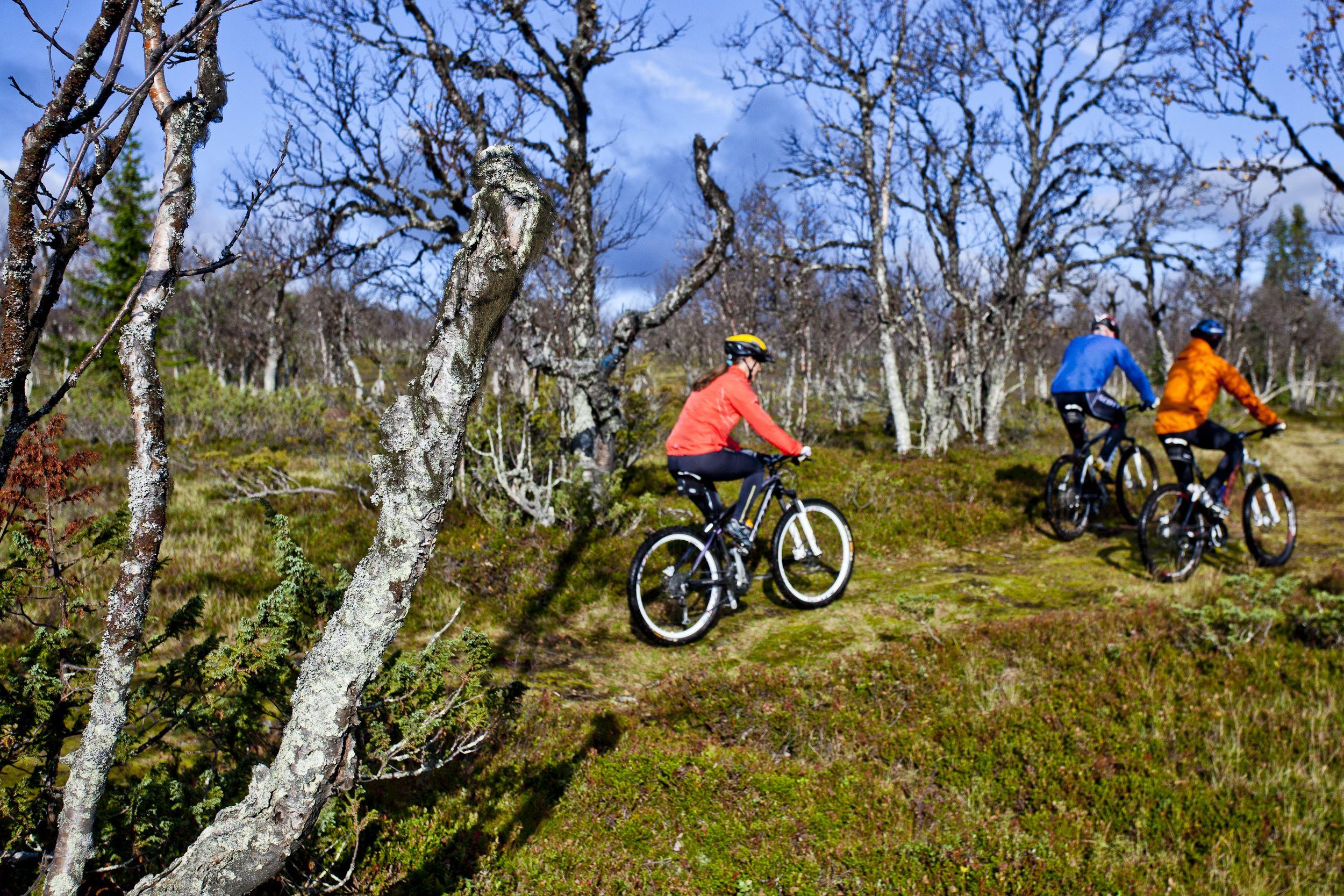 Cykeluthyrning Tänndalen