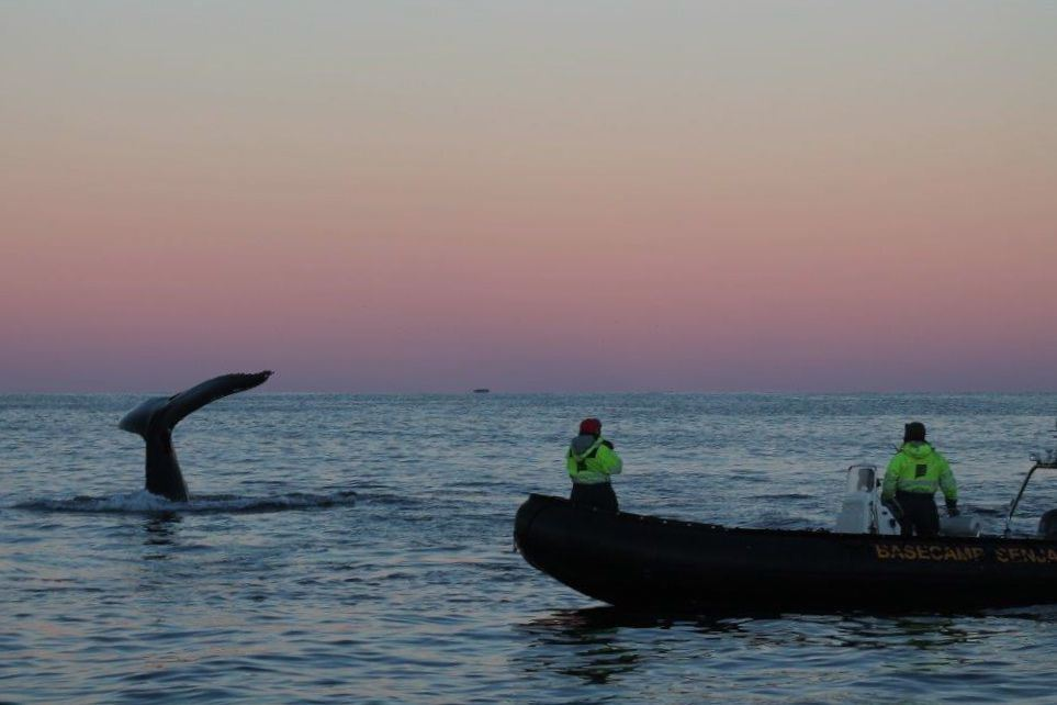Exclusive 2.5-day Whale, Orca and Northern Lights Expedition on Spectacular Senja – Basecamp Senja