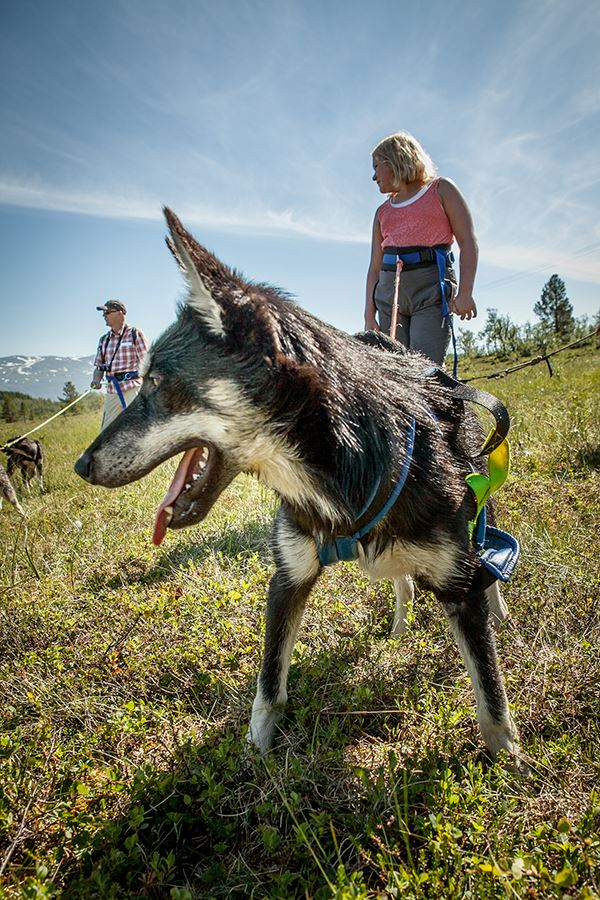 Hiking with Huskies - Tromsø Villmarkssenter
